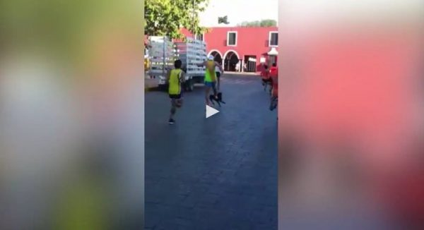 Maratonista que pateó a un perro mientras corría ofreció disculpas