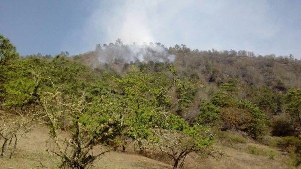 Incendio Forestal en Sierra Norte controlado en un 55 por ciento