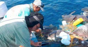 Rescatan a tortugas atrapadas en un palangre en Oaxaca