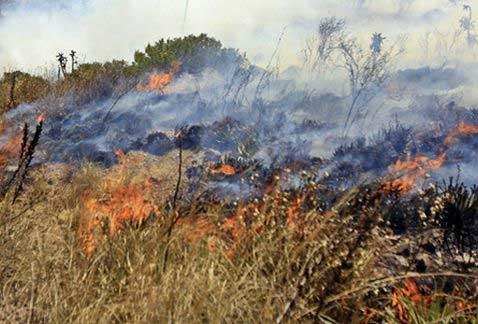 Atendió bomberos alrededor de 120 incendios en mayo