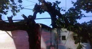 Reporta PC alrededor de 60 árboles caídos por tormenta en Tuxtepec