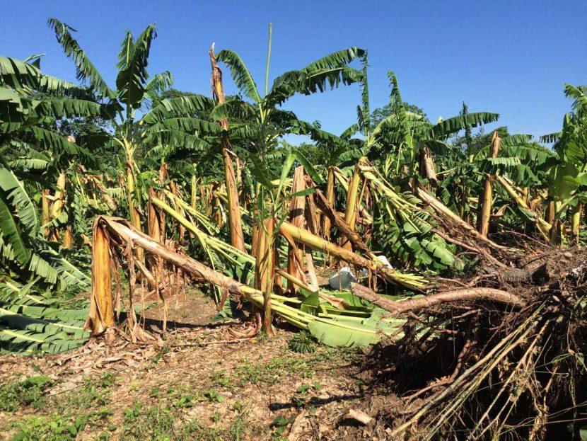 Siniestros por tormenta retrasarán cosechas en la Cuenca: SAGARPA