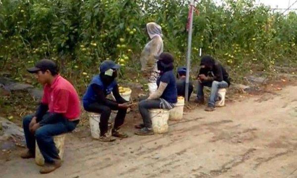 Hallan campos de concentración de jornaleros en Coahuila