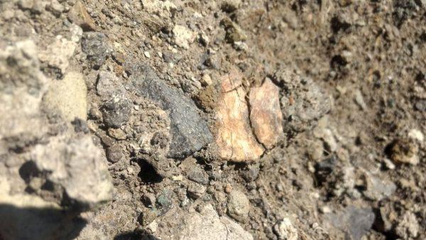 Hallan en Oaxaca restos de elefante de 10 mil años de antigüedad