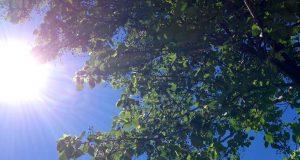 Canícula podría afectar actividades agrícolas en Oaxaca: CEPCO