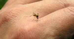 Muere niño por posible contangio de dengue en Juchitán