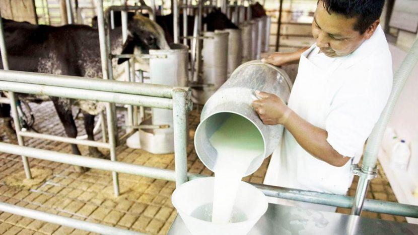 En próximos días inicia construcción del centro de acopio de leche en Loma Bonita