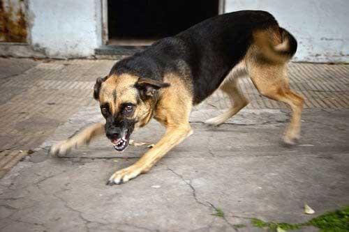 Detecta PC, más de 10 casos de perros con rabia en Tuxtepec