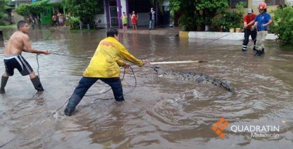 Capturan a cocodrilo en calles de Michoacán