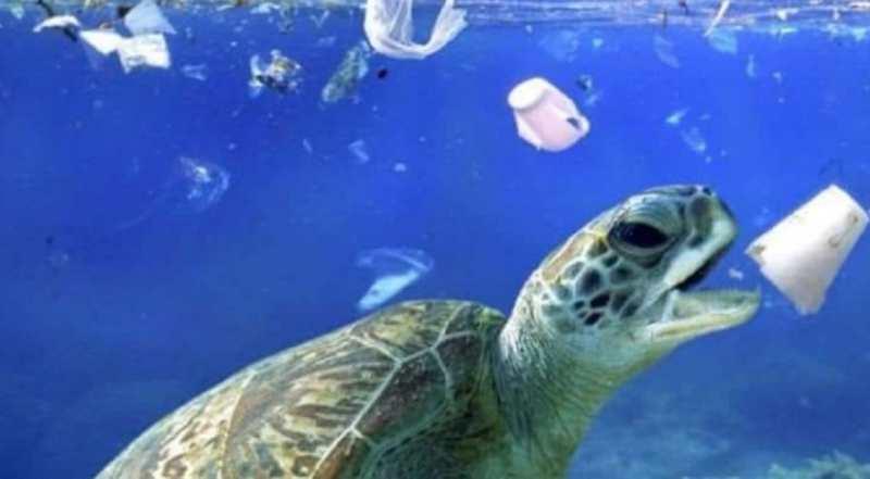 Semarnat pide no usar desechables en visita a Playas