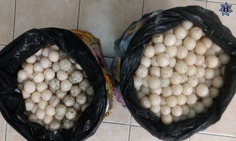 Detienen a mujer en la Costa, llevaba 2 mil huevos de tortuga