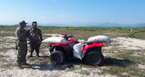 Protege Profepa arribo de 200 mil tortugas golfinas a playas de Oaxaca