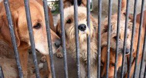 En vez de perrera, dueños responsables: Dirección de Salud