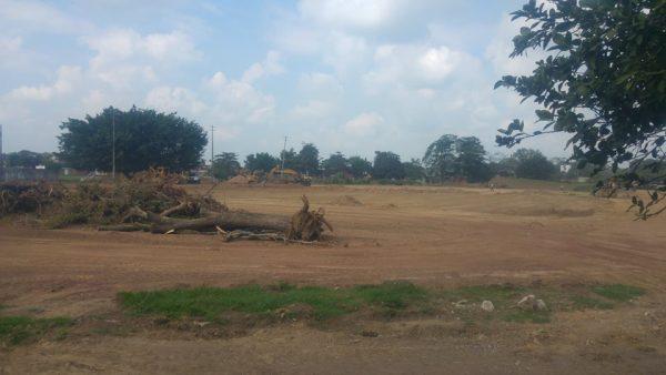 Por obra, cortan mayoría de árboles  en la unidad deportiva