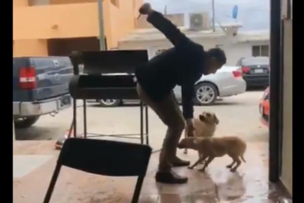 Identifican al presunto agresor que apuñaló a perro en Piedras Negras