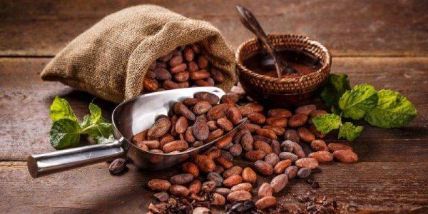 Productores de cacao de Tuxtepec esperan instalar procesadora en este año