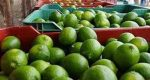 Limoneros ven respiro, tras entregar fruta a Walmart