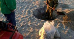 Aseguran más de 10 mil huevos de tortuga en playas de Oaxaca