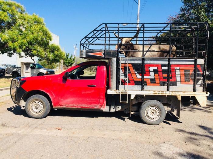 Detenidos por no acreditar propiedad de ganado