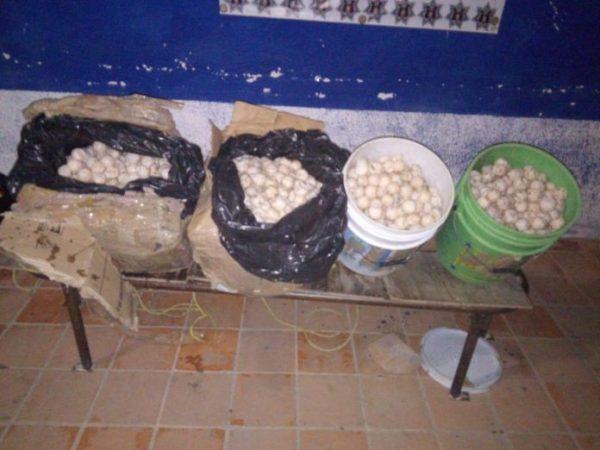 Detienen a una mujer por transportar 3 mil huevos de tortuga