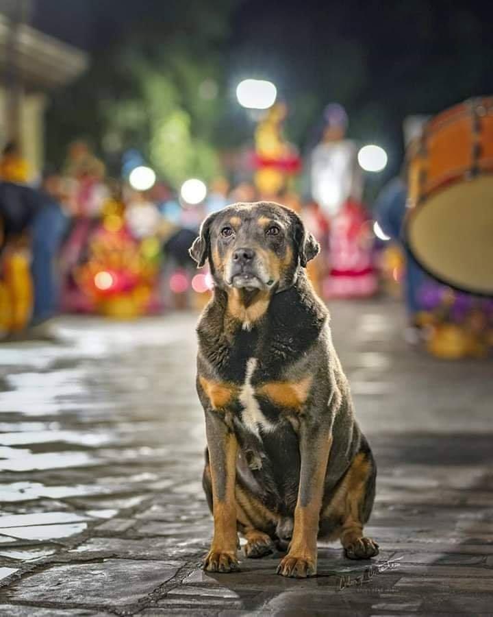 #Viral: Conoce la historia de Mazapán, el perro bailarín de Oaxaca