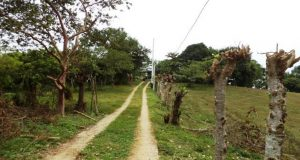Concluye Sinfra obras de energía eléctrica en la Cuenca del Papaloapan