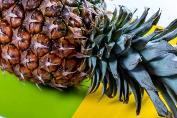 Incrementa Oaxaca producción anual de piña, ocupa 2º lugar nacional