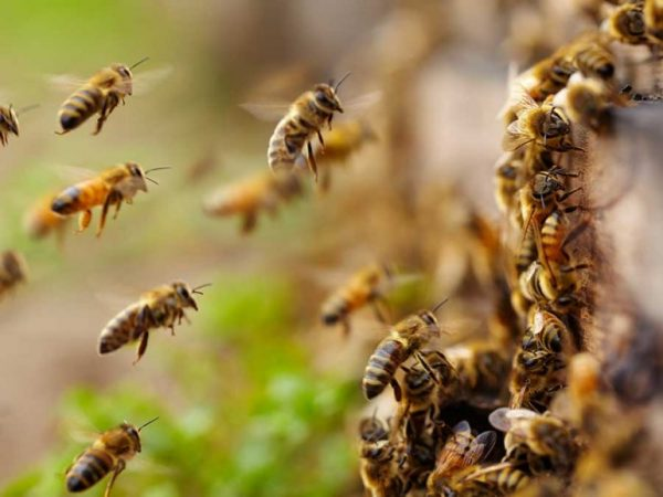 SEMARNAT exhorta a Bomberos de Tuxtepec, a no matar abejas