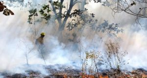 Consumen incendios 7,600 hectáreas en Oaxaca