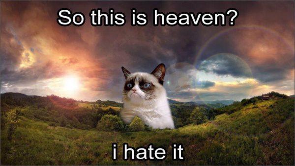 """Muere la gata del meme """"Grumpy Cat"""""""
