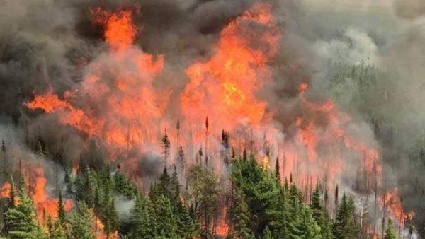 Se registran 136 incendios en Oaxaca, la mayoría en los valles Centrales