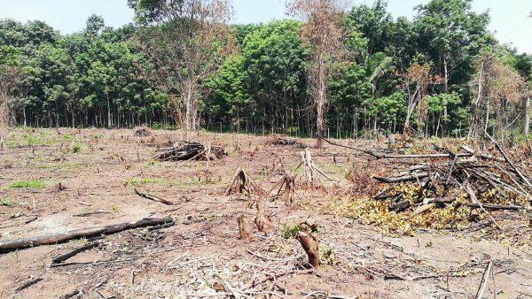 3 incendios forestales y un muerto registra Protección Civil de Valle Nacional