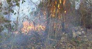Incendio no cesa en Chiltepec,  ha consumido 12 kilómetros de bosques: Edil