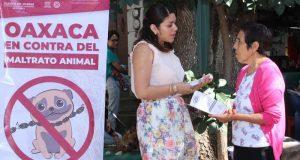 Llegan las jornadas de esterilización animal a más colonias de la ciudad de Oaxaca
