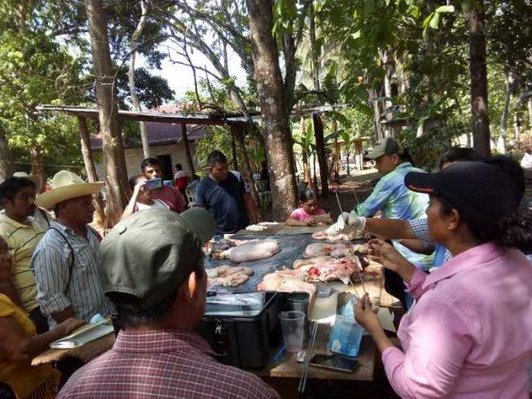 Curso de ganadería en Chiltepec, todo un éxito