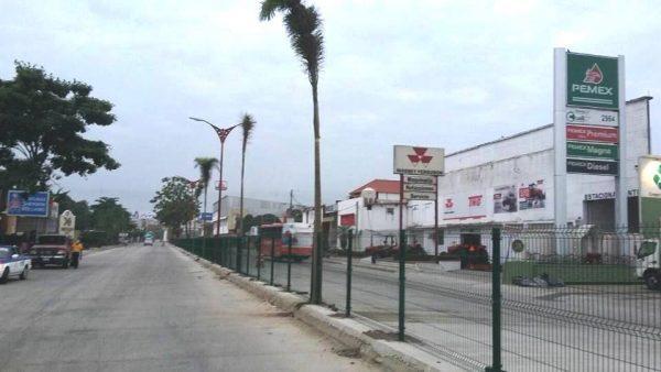 Buscarán reemplazar palmeras muertas por robles en boulevares de Tuxtepec