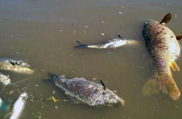 Exhorta Legislativo a saneamiento de ríos Papaloapan y Tonto en Tuxtepec, tras mortandad de peces