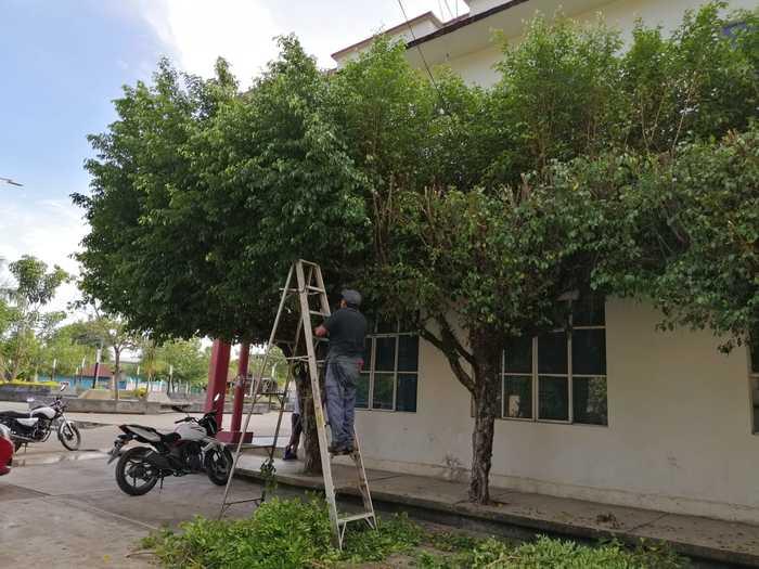 poda arboles chiltepec (4)