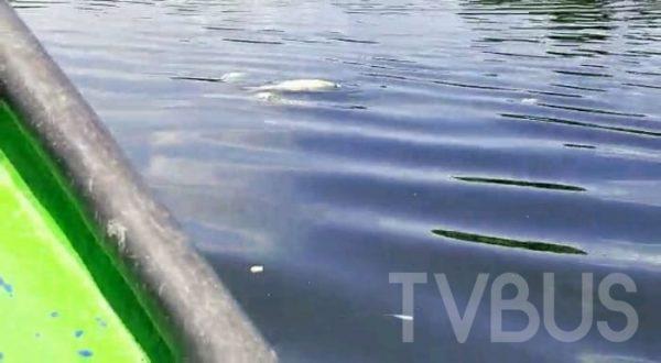 En un recorrido, constata ECAFF, grave contaminación al Río Tonto por descarga de empresa
