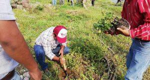 Realizan reforestación en río Valle Nacional para la preservación de su afluente