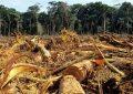 Por ecocidio deben plantar 3 mil árboles en Chiapas