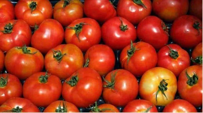 Exportadores mexicanos de tomates logran acuerdo con EU y se libran de arancel