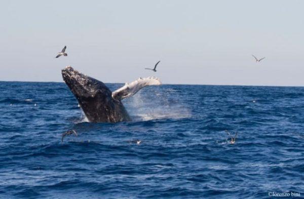 Puerto Escondido declarado zona de observación de ballenas