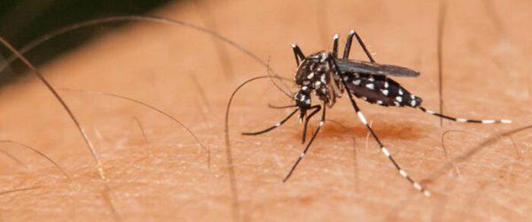 Aumentan a 108 las muertes por dengue en México
