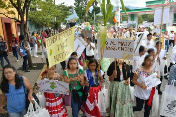 """Celebra Secundaria """"Moisés Sáenz Garza"""" defensa del maíz nativo"""