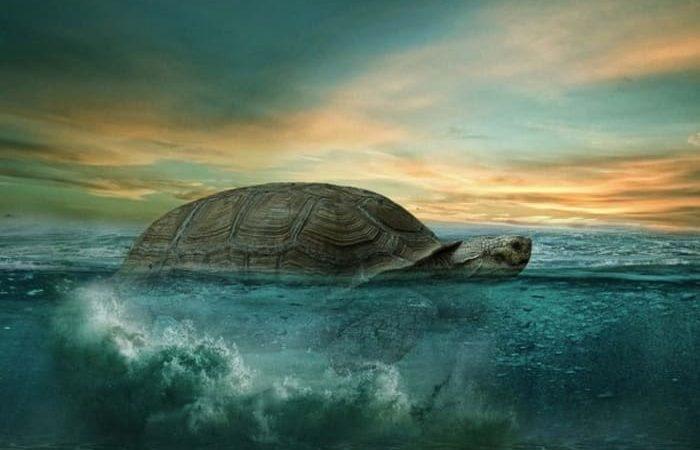 A los 344 años muere Alagba, la tortuga más vieja de África