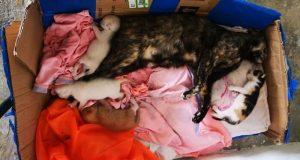 """Denuncian envenenamiento de """"gatos"""" en colonia Santa Clara"""
