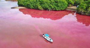 Laguna Manialtepec se tiñe de rosa en la Costa