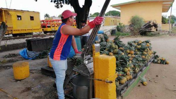 Crisis de la piña se agudiza en Loma Bonita