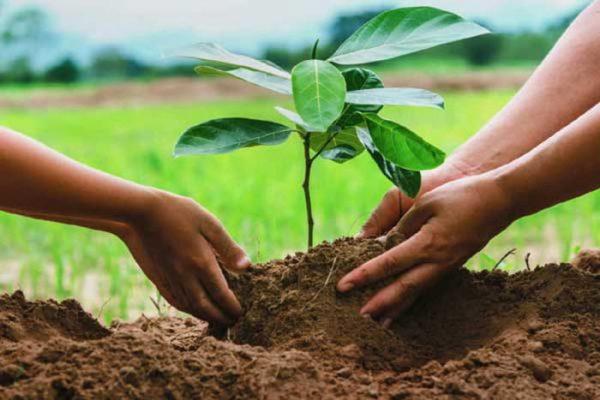 Pretenden reforestar Oaxaca con 4 millones de árboles